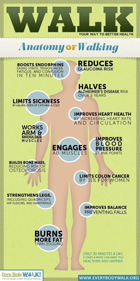 Infographic Anatomy of Walking